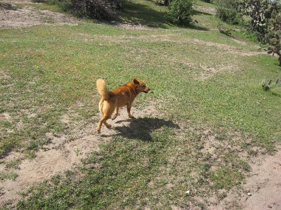 Rancho Xotolar: That's Garfield....he leads the way!