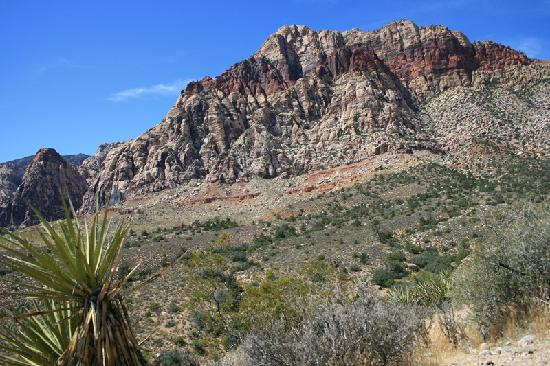 Red Rock Canyon National Conservation Area: montagne e deserto