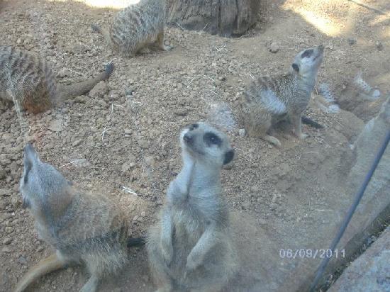Houston Zoo: Funny animal