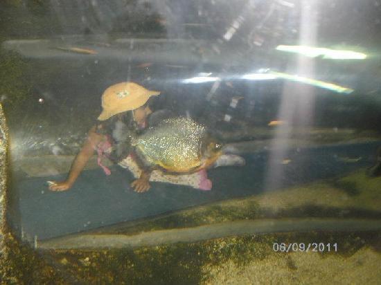 Houston Zoo: Kids inside fish tube
