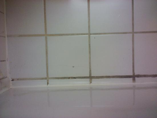 Holiday Inn San Jose - Silicon Valley: Tile/Grout near shower