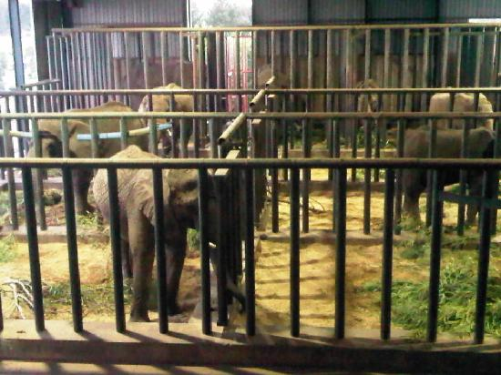 Knysna Elephant Park: Elephant's sleeping enclosure