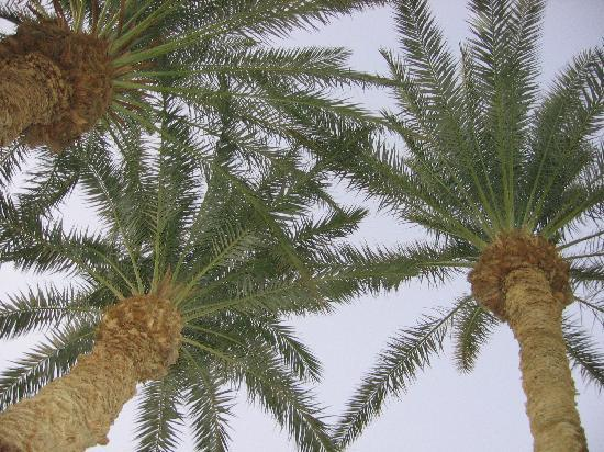 Sunrise Lodge: Palms in the courtyard