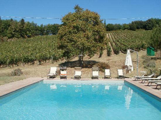 Podere Vignola: the amazing swimming pool!!!