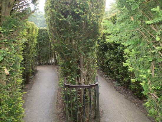 Hampton Court Palace: labyrinth