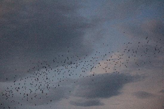 Bat Flight Program in Carlsbad Cavern National Park: Carlsbad_Bat Flight 1