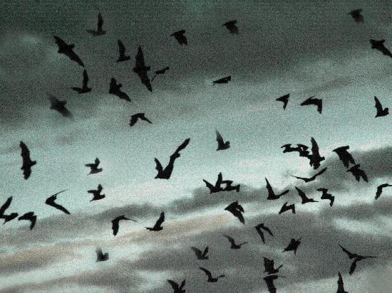 Bat Flight Program in Carlsbad Cavern National Park: Carlsbad_Bat Flight 4