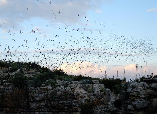 Bat Flight Program in Carlsbad Cavern National Park: Carlsbad_Bat Flight 5