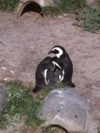 Boulders Beach: love is in the air