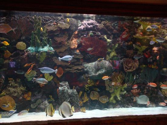 โรงแรมเดอะมิราจ & คาสิโน: acquario nella hall dell'albergo