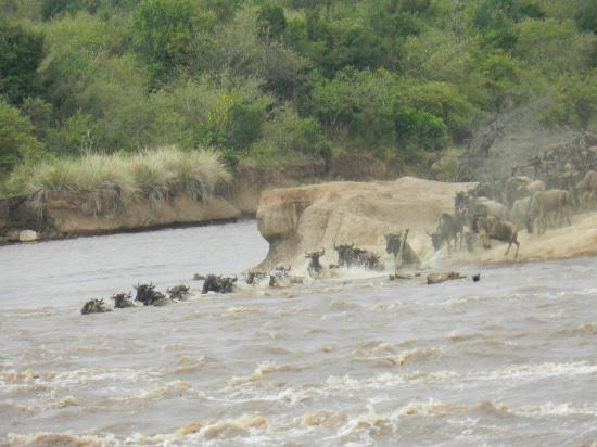 Wildlife Kenya Safaris - Day Trips: The migration