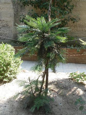 "Giardini Ravino: pianta ""giurassica"""