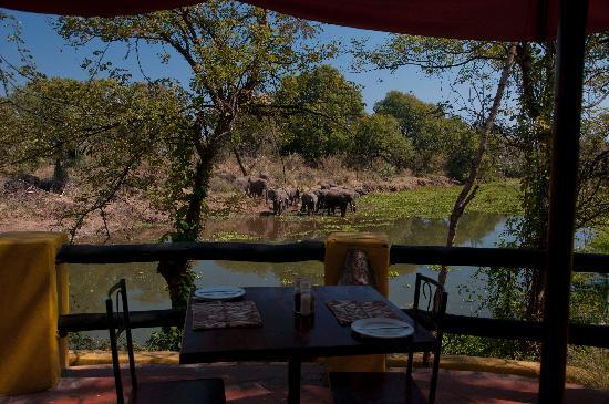 Maramba River Lodge: View from restaurant