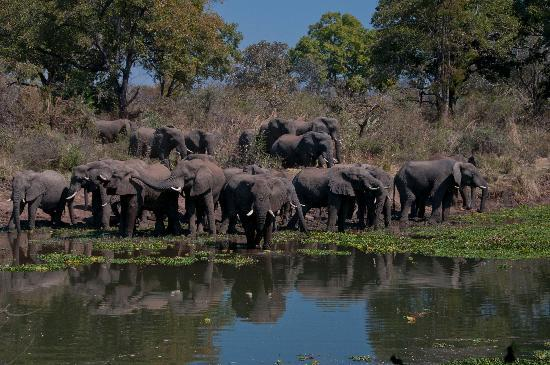 Maramba River Lodge: Eles at lunch time