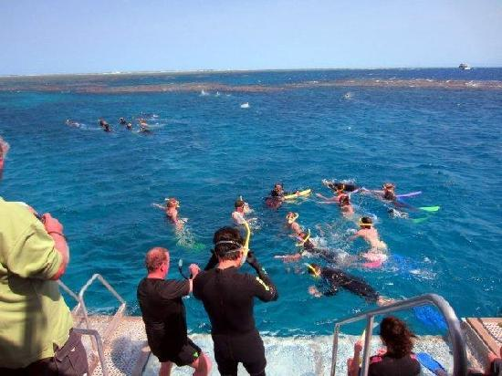 Silverswift Dive & Snorkel: Getting ready to go and explore the reef