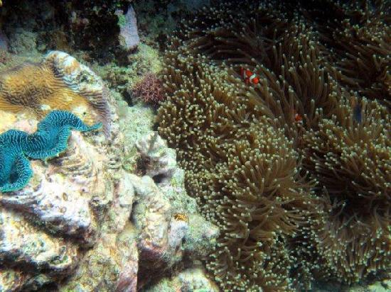 Silverswift Dive & Snorkel: Finding Nemo