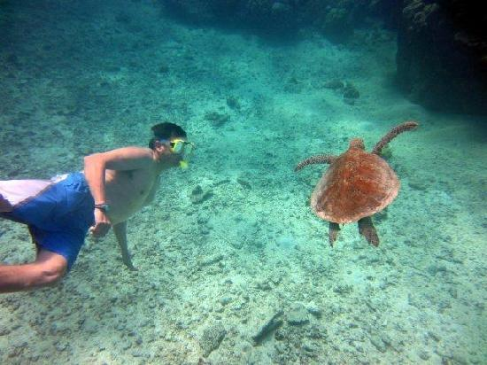 Silverswift Dive & Snorkel: Getting the best of your experience
