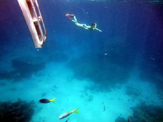 Silverswift Dive & Snorkel: Getting back to the boat