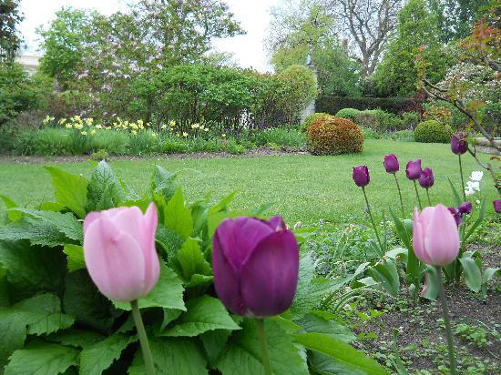 สวนรีเจนท์: Pretty tulips