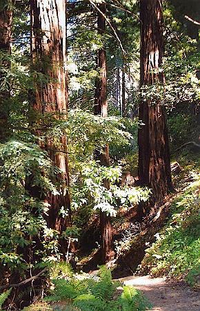 Big Sur Lodge: Great trail