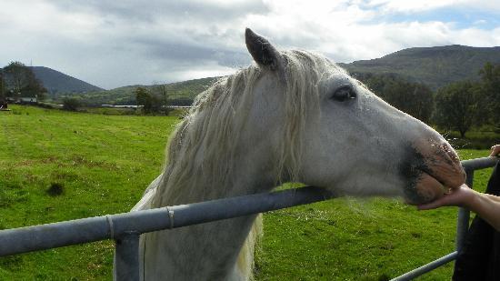 Galway Tour Company: Connemara pony