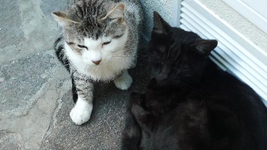 Gasthof Kohlern: Für Katzenliebhaber diese wunderhübschen Kätzchen, die nicht ins Haus dürfen, aber gerne laaaang