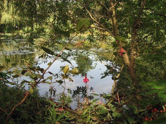 สวนและบ้านของเคลาด์โมเนท์: Artsy pond view