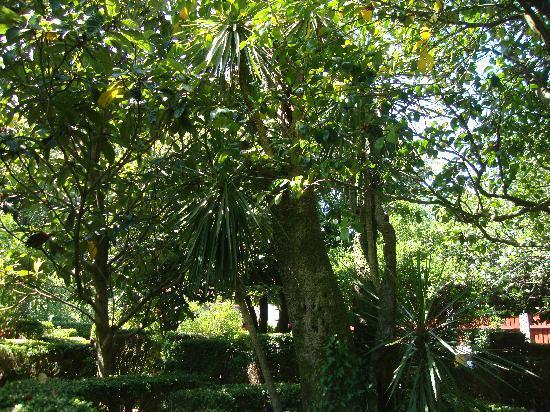 Restaurante Pazo Lagar: los jardines amplios y bien cuidados