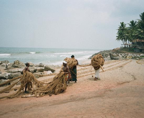Palm Tree Heritage: Beach morning.