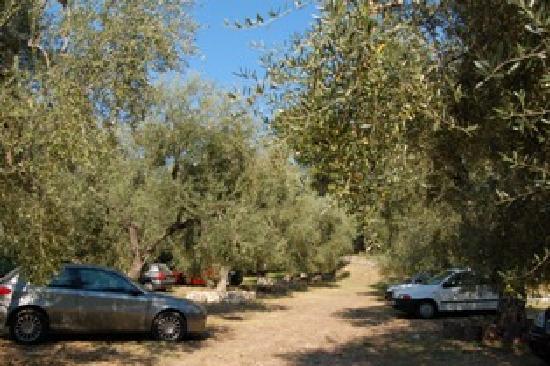 Villaggio Elisena: parcheggio oliveto