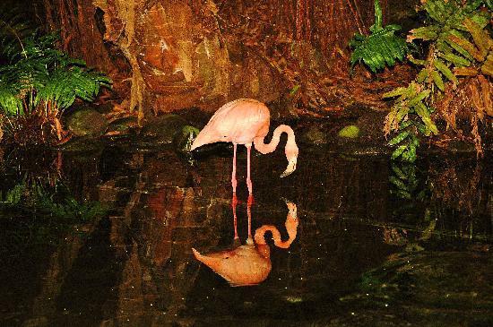 Dreams Punta Cana Resort & Spa: Pink flamingo at night