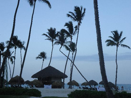 Now Larimar Punta Cana: Cool bent palm tree