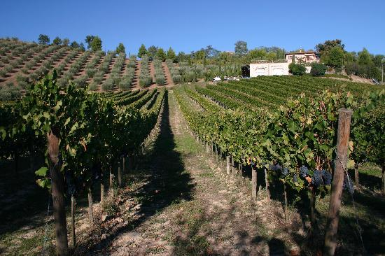 Agriturismo Fiorano: Vineyards & Fiorano winery and B&B