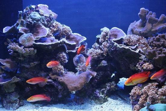 Maui Ocean Center: underwater