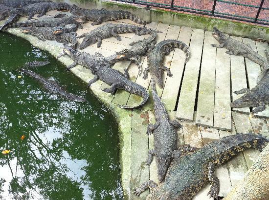 สวนเสือศรีราชา: That's a croc...