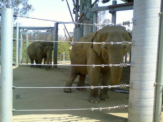 San Diego Zoo, California