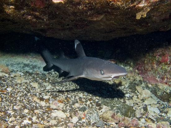 Mike Severns Diving: White Tip