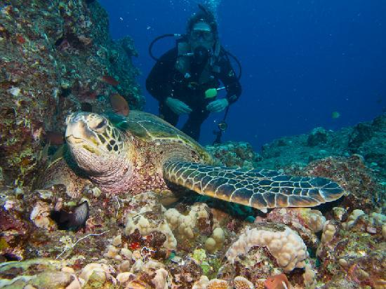 Mike Severns Diving: Another Turtle cleaning station.