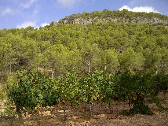 Masia Sumidors: View from Vineyards