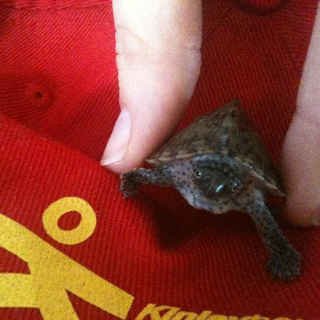 Kinlay House: Our pet turtle receptionist Tito