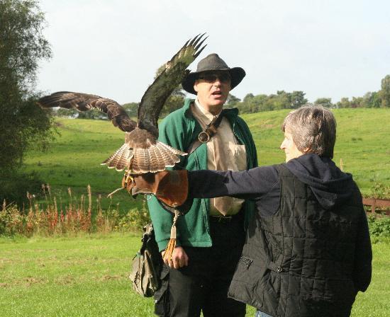 Cheshire Falconry: Prepare for touchdown