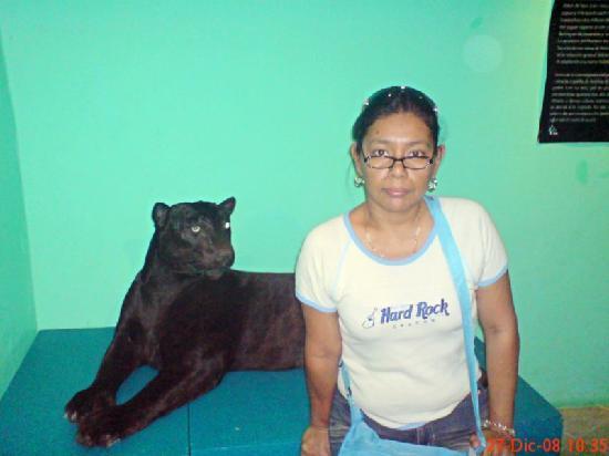 Miguel Alvarez del Toro Zoo (ZOOMAT): jaguar negro...