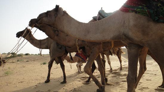 Hotel Jaisal View: Camel Safari