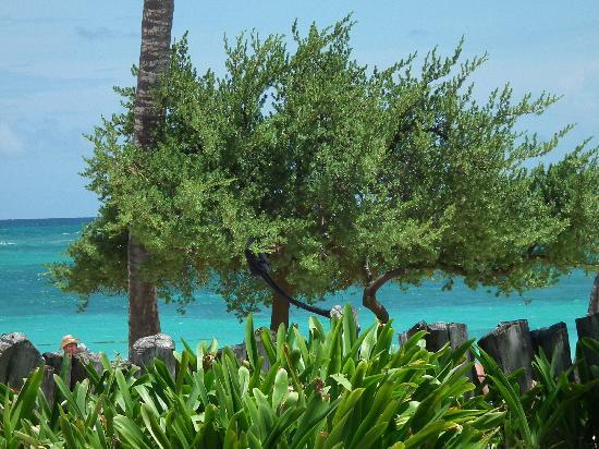 โรงแรมวิค อารีนา บลังกา: La mer