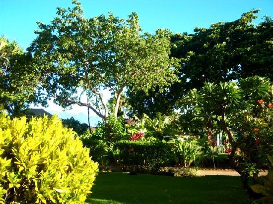 Ka'anapali Beach Hotel: Kaua'i wing ground floor room view