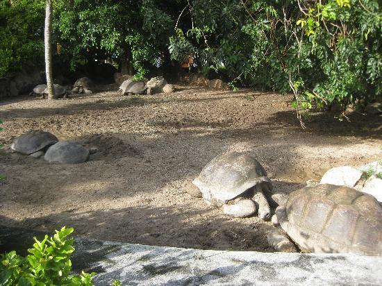 Le Domaine de La Reserve: The giant turtles