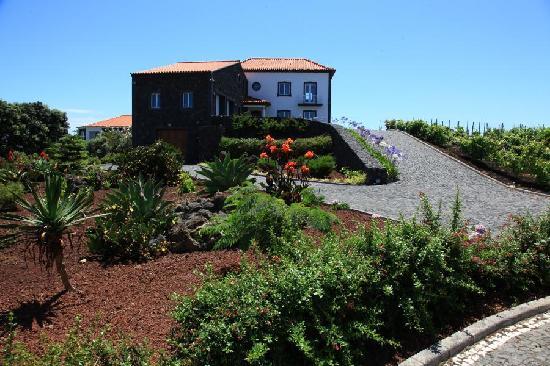 Vivenda da Saudade B&B: Front of property (vineyard & low-water-use garden)