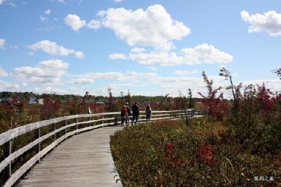 Auberge du Grand Lac: Wetland and ways