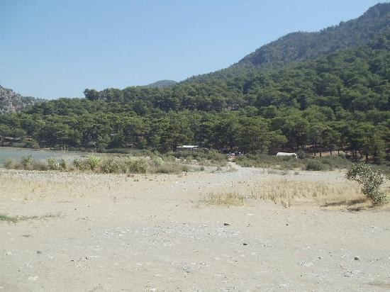 Dalyan Resort Spa: Turtle hospital hidden amongst the pine trees