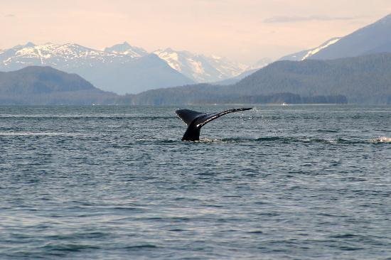 Harv and Marv's Outback Alaska: Whale Tail